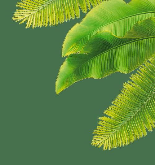 Film de protection solaire et plantes d'intérieur, nos conseils pour qu'elles restent en bonne santé